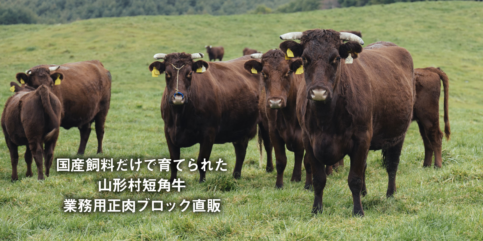 国産飼料たけで育てられた山形村短角牛 業務用正肉ブロック直販